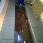 IMG00550-20120425-0855