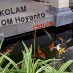 Kolam Koi Hoyanto